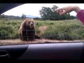 Пока, медвед!